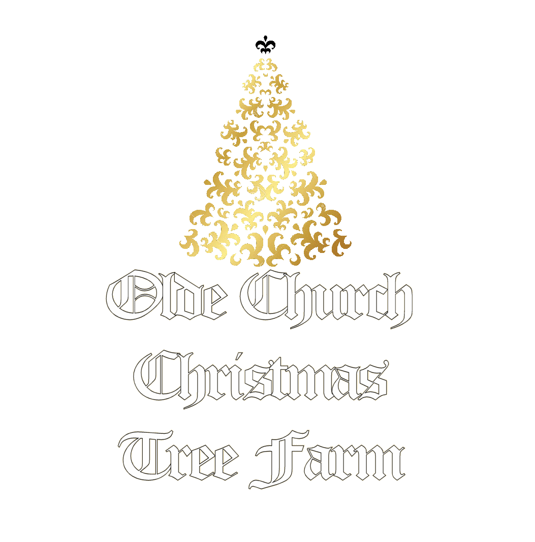 Olde Church Christmas Tree Farm
